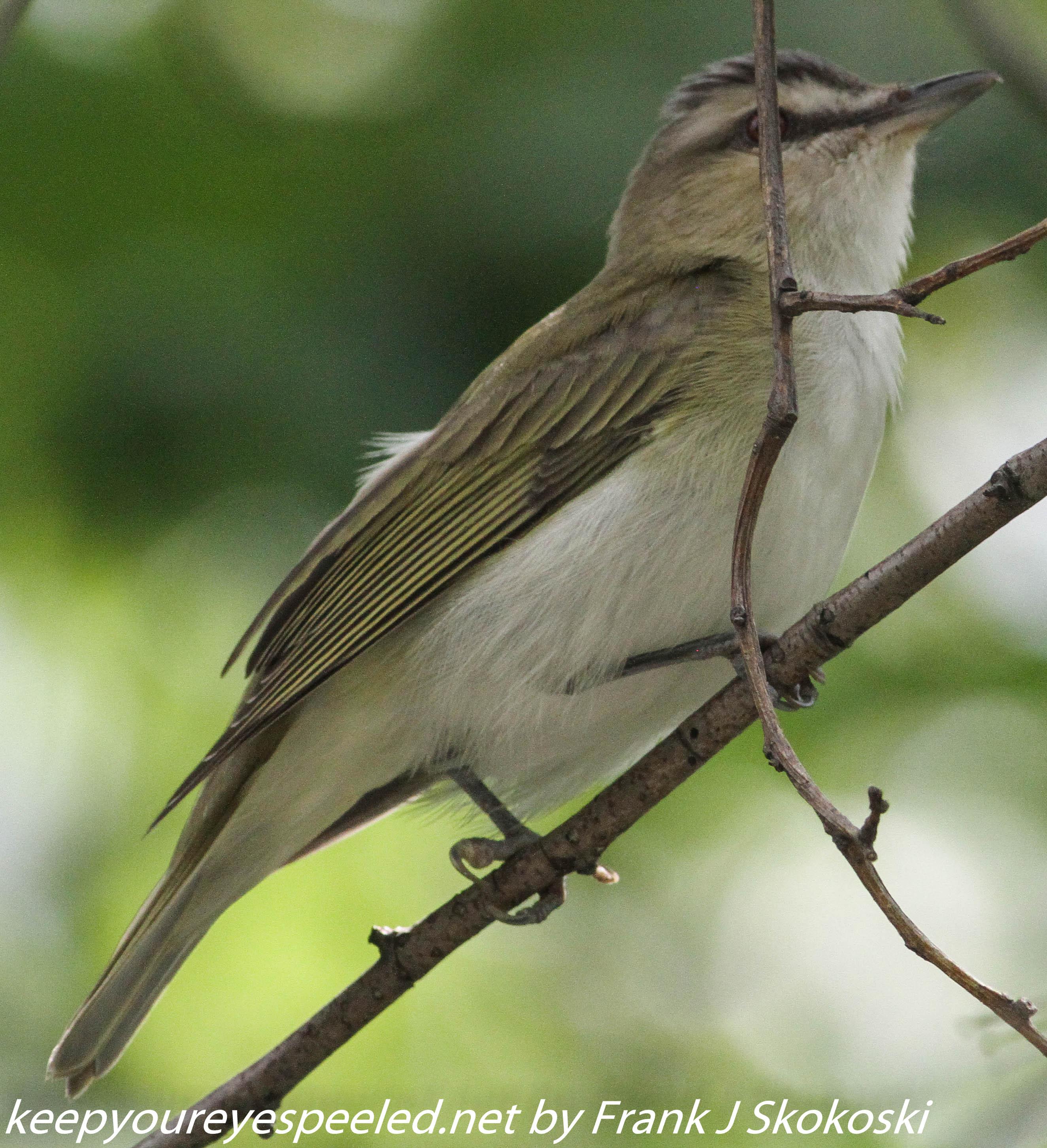 Lehigh Gap birds (25 of 31)