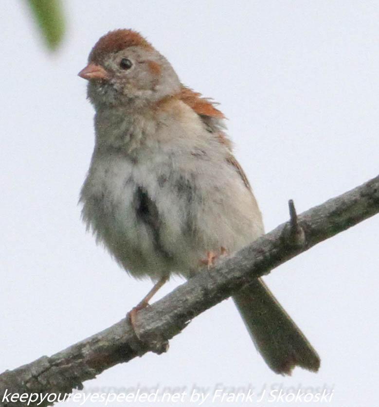 Lehigh Gap birds (7 of 31)