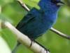 Lehigh Gap birds (19 of 31)