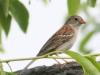Lehigh Gap birds (3 of 31)