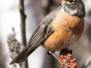 Lehigh Gap Hike robins March 17 2018