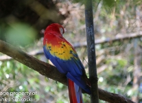 macaw parrot (2 of 3).jpg