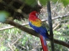 macaw parrot (3 of 3).jpg