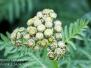 macro hike plants and fruits June 30 -July 4 2016