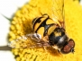 macro insects June 29 2015
