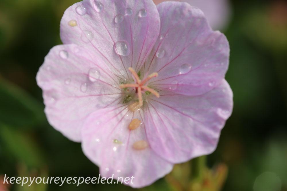 Malmo Sweden flowers  (2 of 27).jpg
