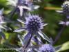 Malmo Sweden flowers  (1 of 2).jpg