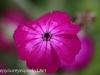 Malmo Sweden flowers  (15 of 27).jpg