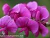 Malmo Sweden flowers  (16 of 27).jpg