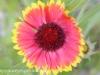 Malmo Sweden flowers  (20 of 27).jpg