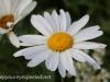 Malmo Sweden flowers  (21 of 27).jpg