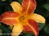 Malmo Sweden flowers  (24 of 27).jpg