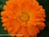 Malmo Sweden flowers  (8 of 27).jpg