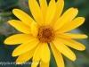 Malmo Sweden flowers  (9 of 27).jpg
