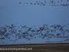 Manitoba Cananda  morning drive  (10 of 28)