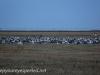 Manitoba Cananda  morning drive  (8 of 28)