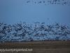 Manitoba Cananda  morning drive  (9 of 28)