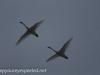 Middle Creek birds (10 of 32).jpg