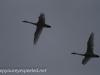 Middle Creek birds (11 of 32).jpg