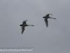 Middle Creek birds (15 of 32).jpg
