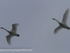 Middle Creek birds (17 of 32).jpg