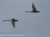 Middle Creek birds (18 of 32).jpg