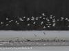 Middle Creek birds (2 of 32).jpg