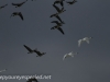 Middle Creek birds (22 of 32).jpg