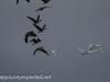Middle Creek birds (23 of 32).jpg