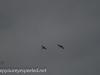 Middle Creek birds (24 of 32).jpg