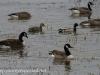Middle Creek birds (28 of 32).jpg