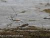 Middle Creek birds (29 of 32).jpg