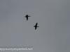 Middle Creek birds (32 of 32).jpg