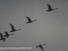 Middle Creek birds (4 of 32).jpg