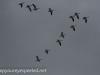 Middle Creek birds (5 of 32).jpg