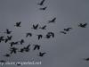 Middle Creek birds (7 of 32).jpg