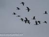 Middle Creek birds (8 of 32).jpg