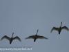 Middle Creek birds bald eagle (1 of 32).jpg