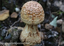 macro mushrooms (6 of 23).jpg