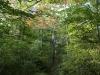 Nescopeck  State park  (5 of 36)