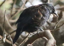 New-Zealand-Day-Eight-Stewart-Island-evening-walk-birds-1-of-16