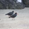 New-Zealand-Day-Eight-Stewart-Island-evening-walk-birds-10-of-16