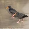 New-Zealand-Day-Eight-Stewart-Island-evening-walk-birds-14-of-16
