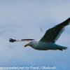 New-Zealand-Day-Eight-Stewart-Island-evening-walk-birds-8-of-16