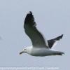 New-Zealand-Day-Eight-Stewart-Island-evening-walk-birds-9-of-16