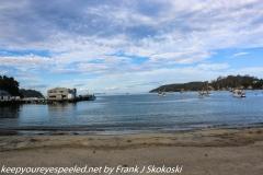 New Zealand Day Eight Stewart Island Evening walk February 13 2019