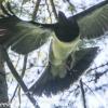 New-Zealand-Day-Eight-Stewart-Island-Ulva-Islan-birds-d-1-of-28