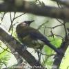 New-Zealand-Day-Eight-Stewart-Island-Ulva-Islan-birds-d-10-of-28