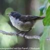 New-Zealand-Day-Eight-Stewart-Island-Ulva-Islan-birds-d-11-of-28