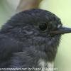 New-Zealand-Day-Eight-Stewart-Island-Ulva-Islan-birds-d-13-of-28